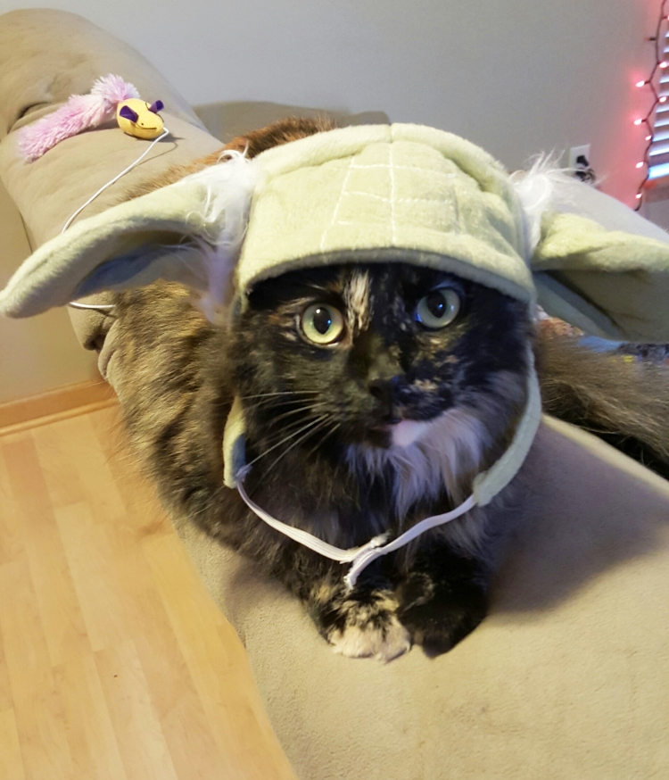Sassy with her Yoda hat!